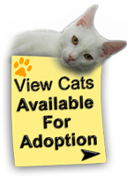 View Cats Available For Adoption
