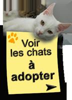 Voir les chats à adopter