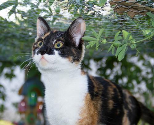 worlds most beautiful cat