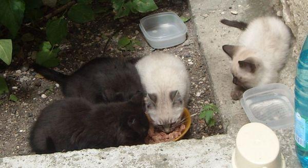Si vous nourrissez les chats